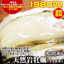 「満天☆青空レストラン」鳥取県 岩美町『岩牡蠣』